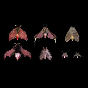 'Moth Collection' (pink / violet) Postcard