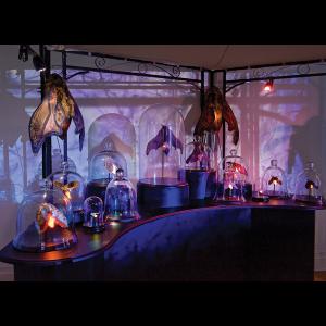 'Bell Jars on Display' Postcard